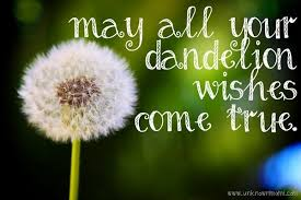 Dandelion-wishes Full Pc Game Crack